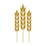 Harvesting wheat ears cereal. Vector illustration eps 10 Royalty Free Stock Image