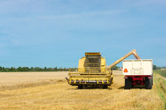 Harvesting wheat during the end of summer Stock Image