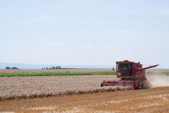 Harvesting Wheat. Farmer in combine harvester harvesting wheat plants Stock Photos