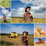 Harvesting wheat field Stock Image