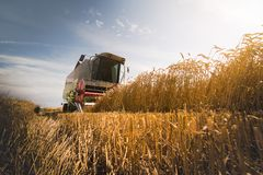 Harvesting of wheat field with combine royalty free stock images