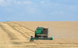 Harvesting wheat harvester Royalty Free Stock Photo