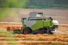 Combine harvester in action on wheat field, aerial drone view Royalty Free Stock Image