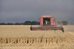 Harvesting the wheat Royalty Free Stock Photos