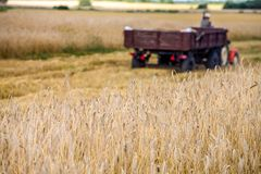 Harvesting of wheat. Tractor and special harvesting equipment. Stock Image