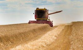 Harvesting wheat Stock Images