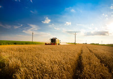 Harvesting wheat Royalty Free Stock Images
