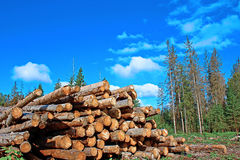 Harvesting of wood Stock Images