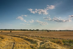 harvestlandscapevete royaltyfria bilder