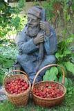 Harvestor Стоковое Фото