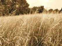 Free Harvests Royalty Free Stock Photo - 3173005
