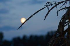 Harvesttime Autumn Moon royalty-vrije stock foto's