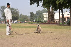 Haryana, India: Nov 29th,2015: Unidentified man who is master of Langur (big monkey), to scare other small monkeys. Editorial: Haryana, India: Nov 29th,2015 stock photography