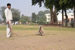 Haryana, la India: 29 de noviembre de 2015: Hombre no identificado que es amo del Langur (mono grande), asustar otros pequeños mo fotografía de archivo