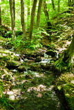 Harz forrest with small creek Royalty Free Stock Photo