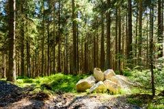 Harz - het meest forrest pijnboom royalty-vrije stock afbeeldingen