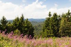 Harz lägre Sachsen, Tyskland Arkivfoto