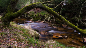 Harz Mountain River Royalty Free Stock Photo