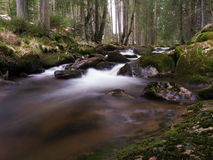 Harz Mountain River Royalty Free Stock Image
