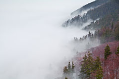 Harz mountains in fog Stock Photos