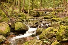 Harz Nationaal Park stock foto