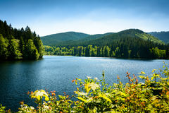 Harz in spring copy space Stock Photo
