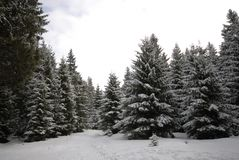 Harz winter. Winter in National Park Harz. Mountain forest in Germany Stock Photography