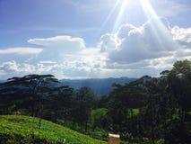 Sun light has fallen on to a tea land stock image