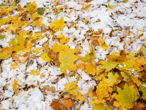 Has covered the yellow fallen-down autumn leaves with the first snow in the park Stock Images