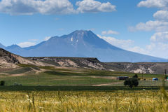 Hasan berg med gräsfältet Arkivfoto
