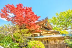 Hase-dera with red maple. Red maple autumn leaves in Hase-dera Temple, commonly called the Hase-kannon, in Kamakura, Japan. Hase-dera is an ancient Buddhist Stock Photos
