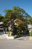 Hase Temple Stock Images
