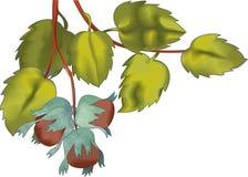 Haselnüsse auf einem Zweig Lizenzfreie Stockfotografie