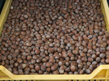 Haselnüsse am Landwirtmarkt Lizenzfreies Stockbild