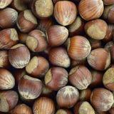 Haselnuss röstete rohes Herbstlebensmittel, Musterhintergrundbeschaffenheit Stockbilder