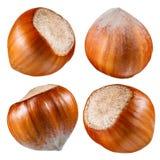 Haselnuss. Sammlung Nüsse lokalisiert auf Weiß Stockfoto