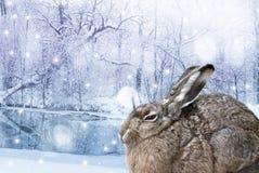 Hasen im Winter Stockbild