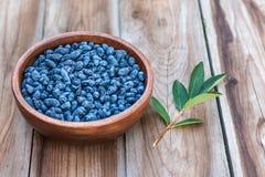 Haskap莓果收获,忍冬属caerulea,也卡耶斯honeyb 图库摄影