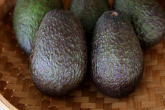 Hass Avocado in a woven bowl Stock Images