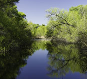 Hassayampa River Preserve, Wickenburg, Arizona. Trees reflecting in calm blue pooling water in the Hassayampa River Preserve, Wickenburg, Arizona Royalty Free Stock Images