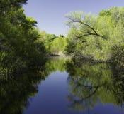 Hassayampa Rzeczna prezerwa, Wickenburg, Arizona Obrazy Royalty Free