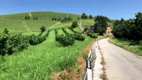Hasselnöt- och vinodling i Piedmont, Italien arkivfilmer