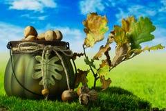 Hasselnötter i den gröna dekorativa krukan på gräset Arkivbilder