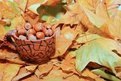 Hasselnötter i höst Royaltyfri Fotografi