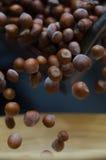 Hasselnötter i rörelsetumbling in i bambu bowlar Arkivfoto