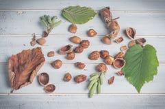 Hasselnötter och dess tillbehör Arkivfoton