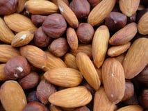 Hasselnötter och mandelbakgrund Arkivbild