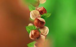 Hasselnötter och sidor som faller från luften royaltyfri bild