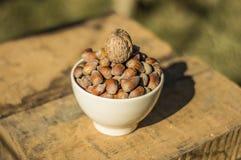 Hasselnötter och valnötter Arkivfoton