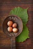 Hasselnötter på träskeden Arkivfoto